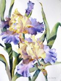 Elaine Tweedy - Edith Wolfard Iris II (SOLD)