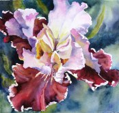 Elaine Tweedy - Bearded Iris