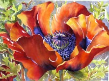 Elaine Tweedy - 'Palette of Orange' Oriental Poppy